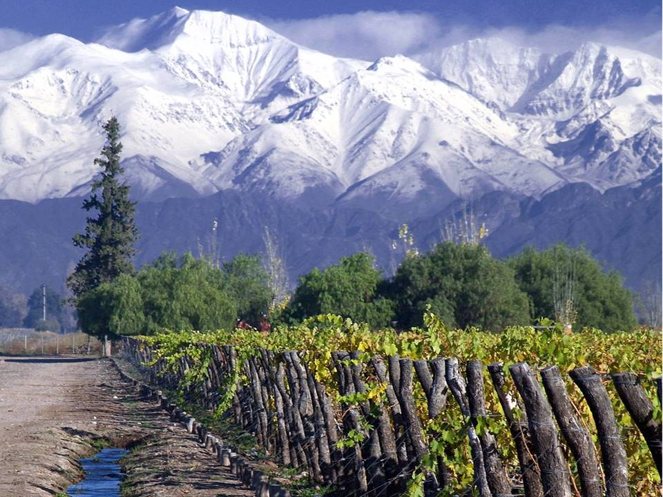Chile wine mountain backdrop First Tours