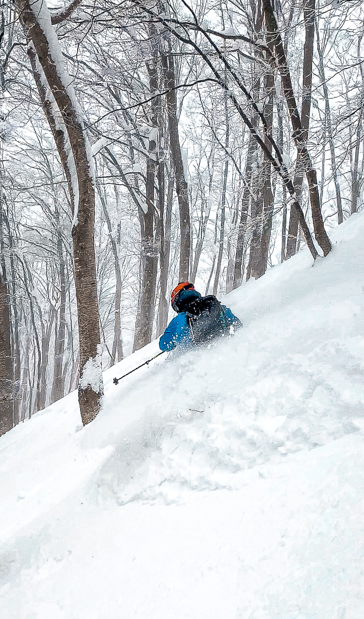 Deep powder skiing Madarao during Powder Culture Tour with First Tours