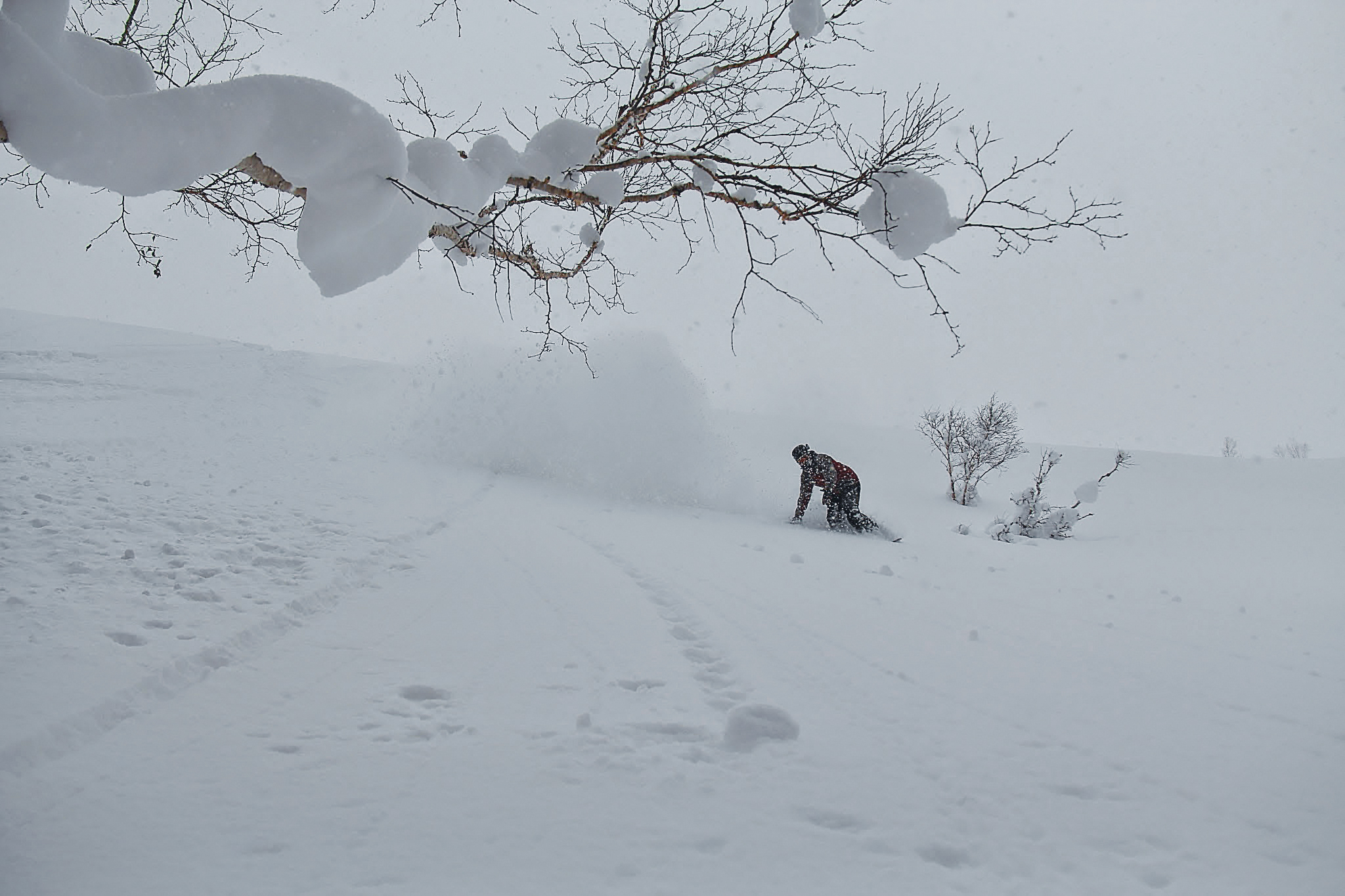Snowboarding under a tree in deep snow with First Tours